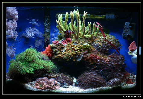 Updated photo of our Nano Reef