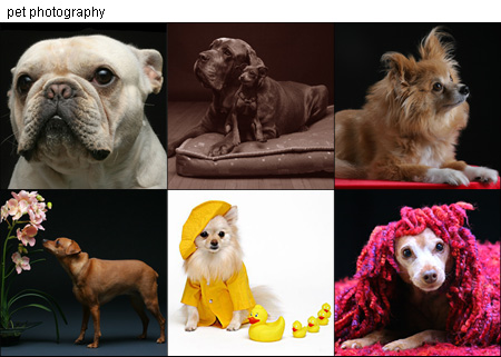 http://www.oc-creative.com/craigslist/pets.jpg