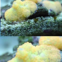 Check out our Nano Reef Gallery!