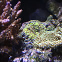 A random photo from one of Anthony's  Reeftanks